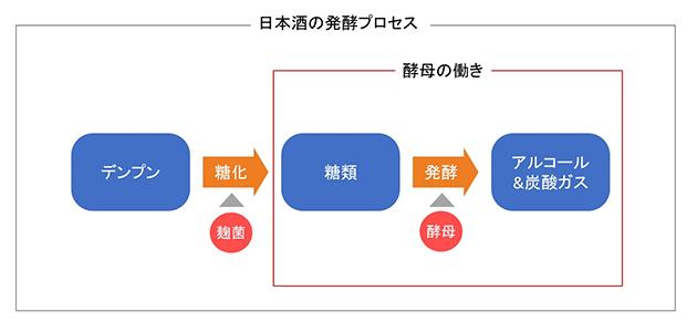 日本酒の発酵プロセス