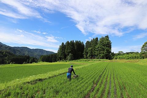 酒米の生産は農地・農村の環境保全に繋がる