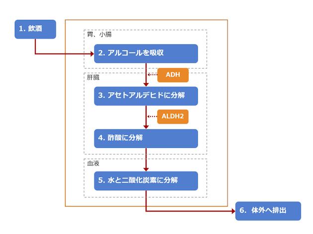 アルコールの分解プロセス図